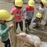 10月16日 移動動物園のお知らせ